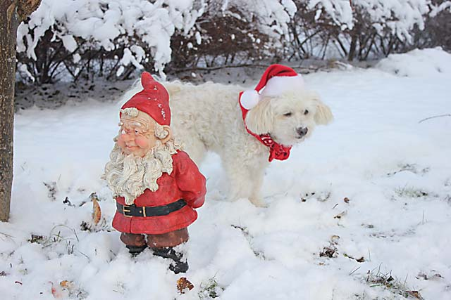 Föreningen Auktoriserade Norrtäljeguider önskar God Jul och Gott Nytt År